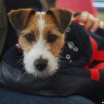 Normativa para perros en el Metro y Bus de Barcelona
