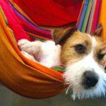 Los perros pueden ir a Restaurantes y Bares en Barcelona
