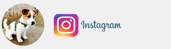 eddie_jackrussell-instagram