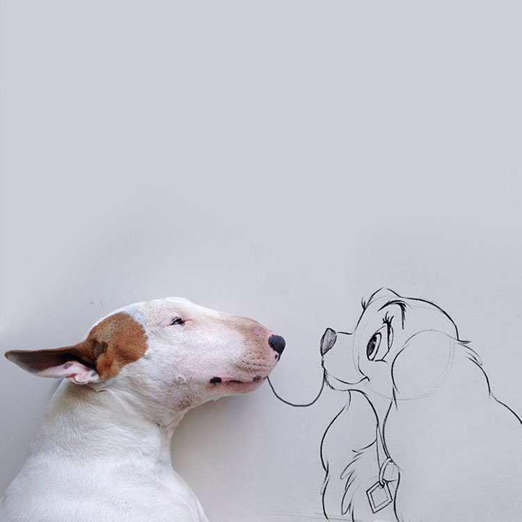 Rafael Mantesso: a dog manem jimmy
