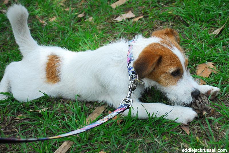 brotdog-cupondescuento