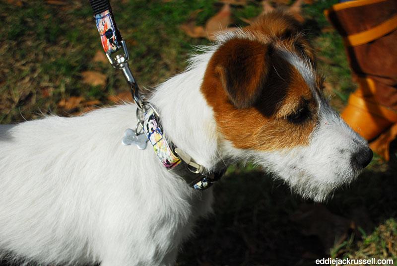 codigo-descuento-brotdog