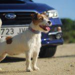 Participa en el Concurso de Subaru #PetoffRoaders en Instagram