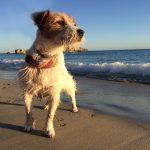 Playas para perros en Cataluña 2017