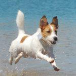 Playas para Perros en Menorca