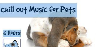 6 horas de música chill out para tu mascota. Para mascotas hiperactivas, estresadas o ansiosas.