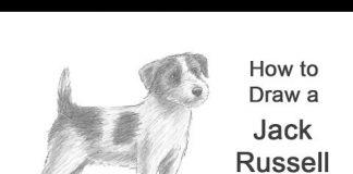 Cómo dibujar un perro (Jack Russell Terrier)