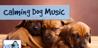 Calma a tu perro con la música. Durante los fuegos artificiales, relaja tu perro estresado. Mejora la ansiedad