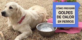 Cómo prevenir los golpes de calor en perros. Mediterranean Natural y Ngorong Ngorong.