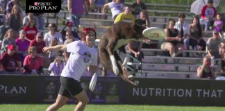 Competencia de perros voladores - Purina Pro Plan Incredible Dog Challenge