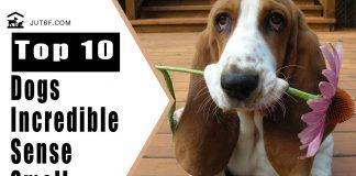Dogs Sense Of Smell - Las 10 mejores razas de perros con un increíble sentido del olor