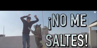ENTRENAR un PERRO a que NO ME SALTE  - MartGon