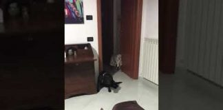 Guilty funny dog