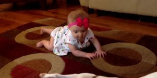 Incredible Dogs Teach Baby How To Crawl  Dog Loves Baby Compilation 1