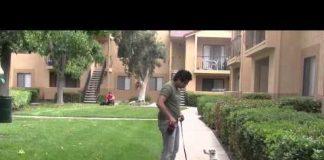 Jack Russell Terrier: Adiestramiento de perros para perros que ladran con correa, Reactividad