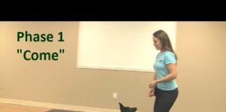 La mejor manera de enseñar a un cachorro a venir cuando se le llama (K9-1.com)