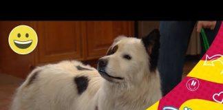Mi perro tiene un blog: Se descubre el secreto de Stan | Disney Channel Oficial