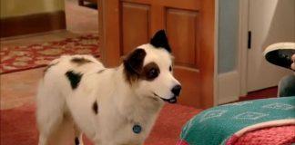 Perro con un blog - espiando a Karl
