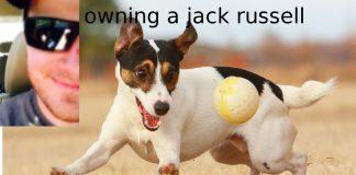 Ser propietario de un Jack Russell Terrier (cómo es realmente)