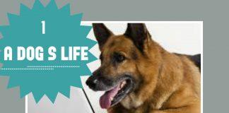 perros graciosos -dog consejos de entrenamiento