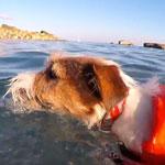 Eddie nadando entre tiburones