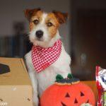 """Ya he recibido mi """"Patas Box"""" de Octubre especial Halloween"""