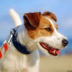 Transporta a tu perro en coche de un modo seguro