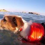 Eddie nadando en Menorca