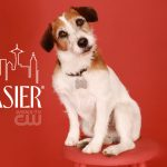 Eddie el perro famoso de Frasier !!