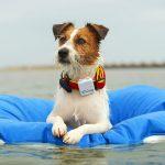 A la playa con los mejores complementos para perros!