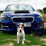 Alquiler de coches con mascotas